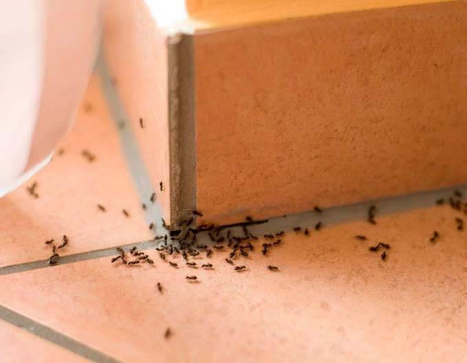 Способы борьбы с летающими муравьями в доме