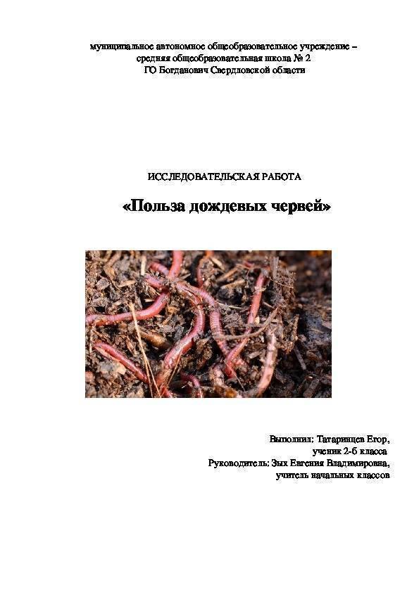 Дождевой червь. дождевой червь: образ жизни, среда обитания и польза для почвы форма тела дождевого червя описание
