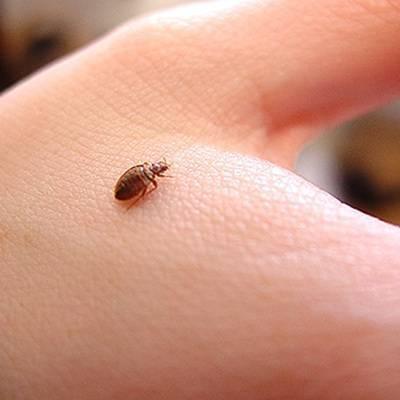 Появились маленькие коричневые жучки? 5 лучших способов борьбы
