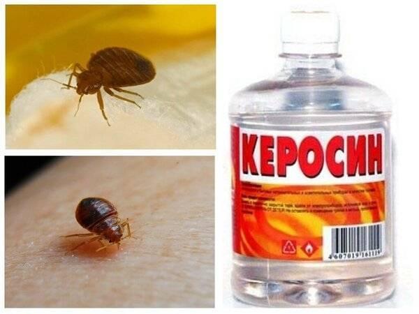 Как избавиться от клопов самостоятельно в домашних условиях навсегда: инсектицидные и народные средства