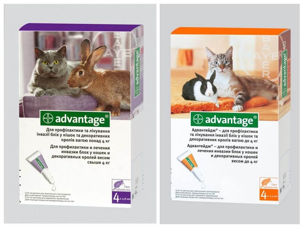 У кроликов блохи: симптомы, причины и лечение