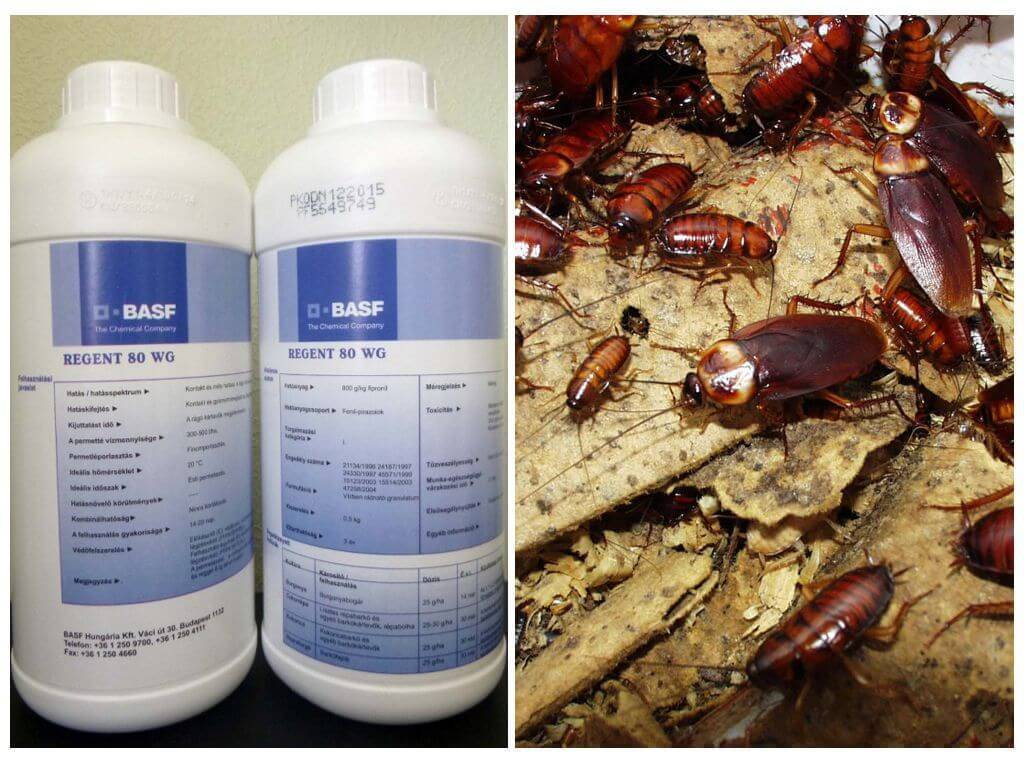 Регент от тараканов – надежное средство, защищающее ваше жилище от насекомых. как разводить средство и как с ним правильно работать для достижения максимального результата? отзывы покупателей