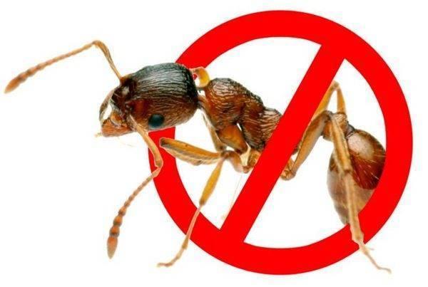 Как избавиться от муравьев на грядке с огурцами: эффективные средства и методы борьбы с насекомыми (100 фото)