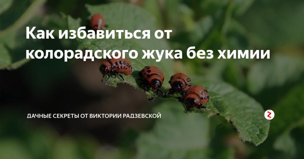 Средство эфория кс против колорадского жука