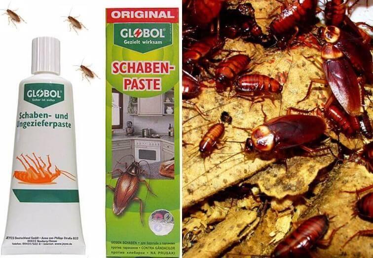 6 особенностей геля от тараканов глобол