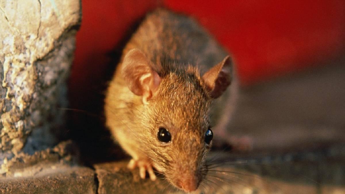 Борьба с летучими мышами