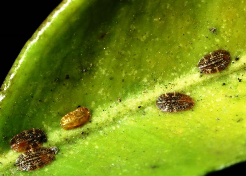 Вредители горшечных растений. вредители комнатных растений: методы борьбы и потенциальный вред