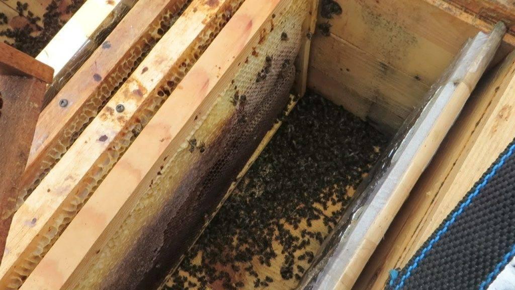 Как зимуют пчелы в улье на воле и в омшанике, что делают