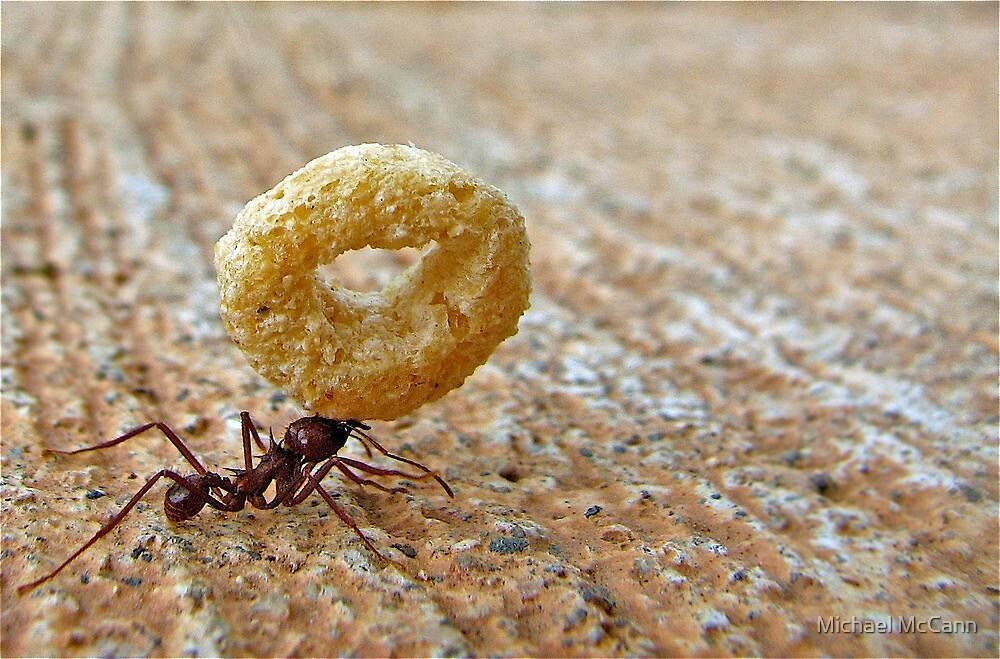 Кислота борная от муравьев как применяется?