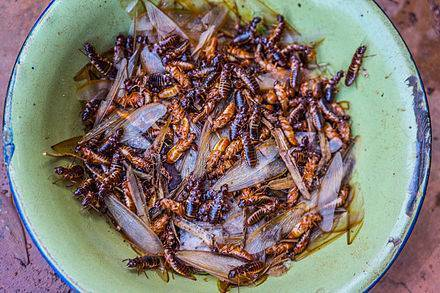 Термиты — википедия (с комментариями)