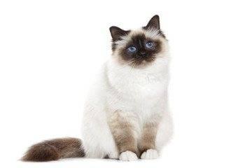 От чего, кроме блох, кот постоянно чешется и лижется