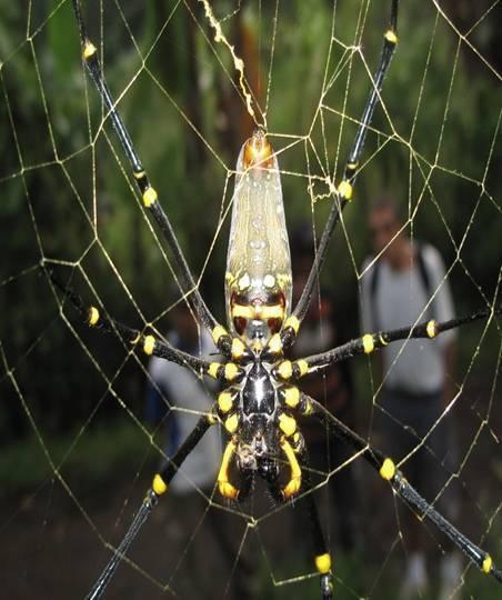 К чему увидеть паука, ползущего вверх