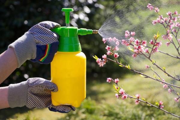 Вредители сада и огорода: описание и меры борьбы