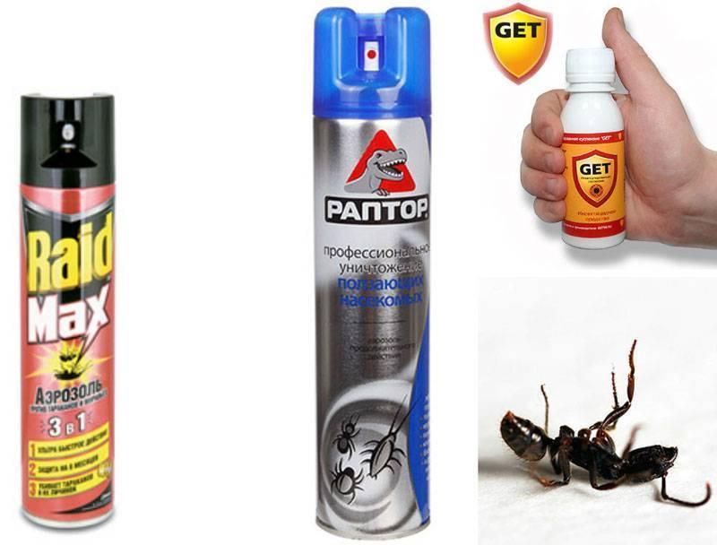 Как избавиться от муравьев в частном доме