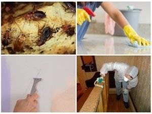 Уничтожение тараканов туманом — отзывы и описание
