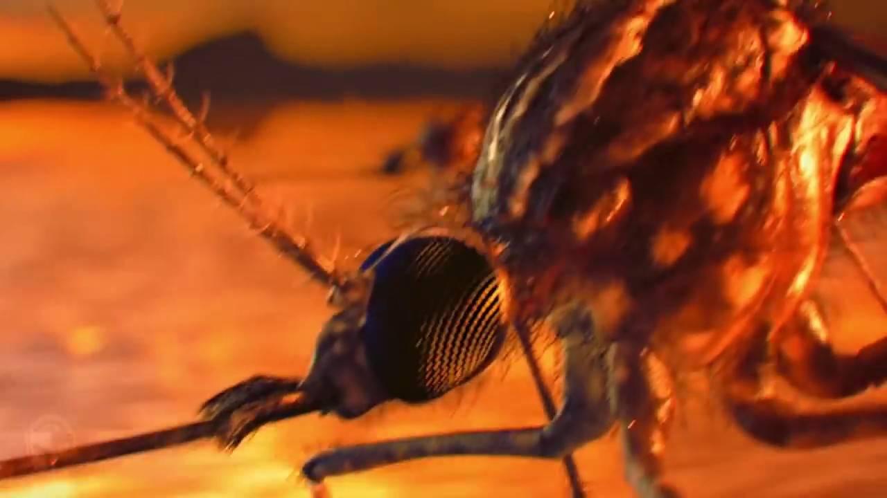 Болит, чешется, краснеет: как избавиться от зуда после укуса комара быстро