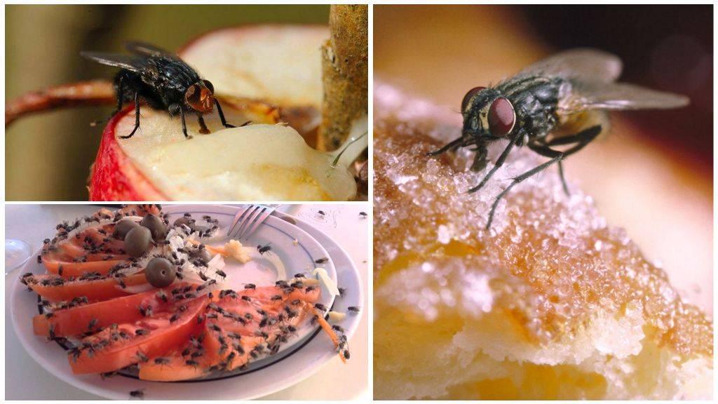 Как убить муху: советы и способы борьбы в квартире и доме