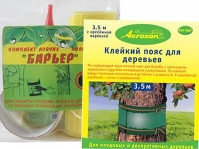 Как избавиться от муравьев на деревьях
