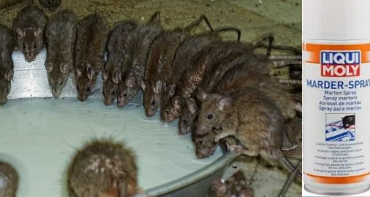 Эффективные средства для крыс и мышей