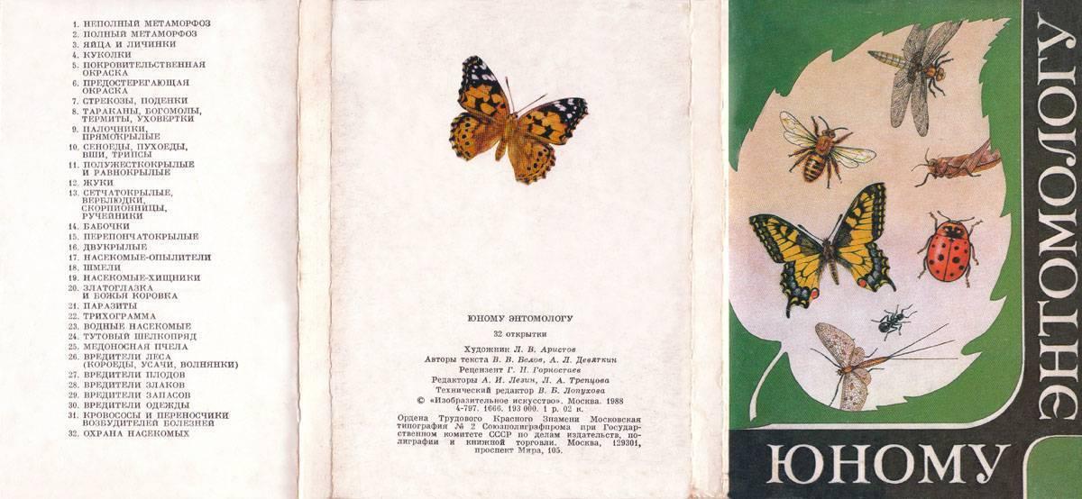 Бабочка пестрянка