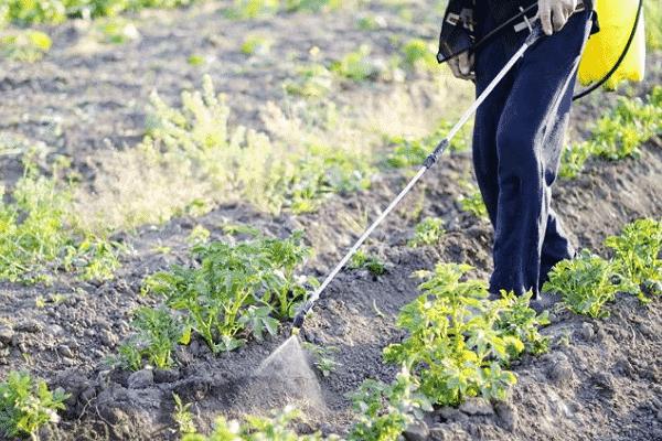 Командор от колорадского жука: инструкция и правила обработки