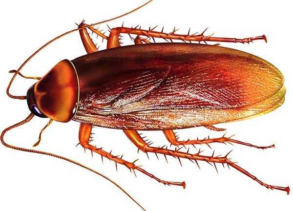 Нашатырный спирт — враг тараканов