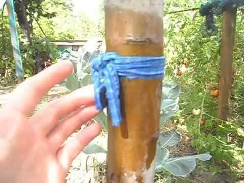 Применение берёзового дёгтя в огороде и саду от вредителей