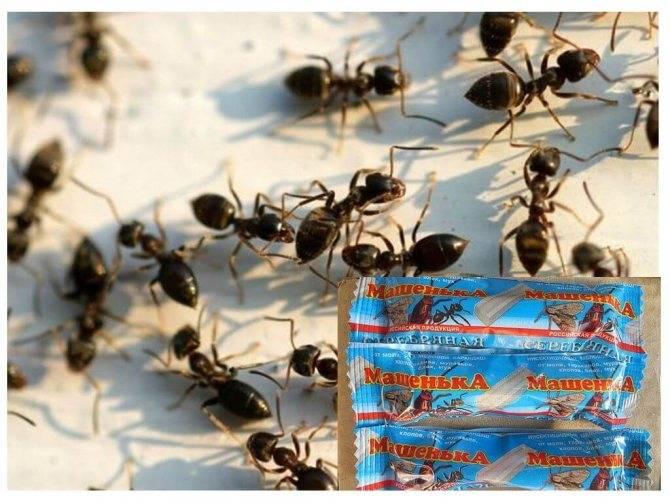 Мелок машенька слабо помогает от клопов, но силен в борьбе с тараканами и муравьями