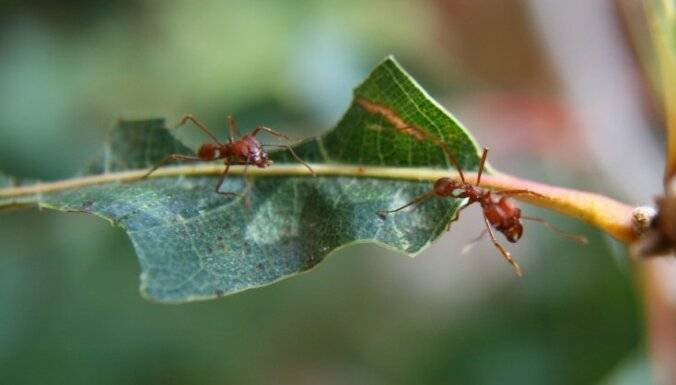 Как избавиться от муравьев на участке навсегда