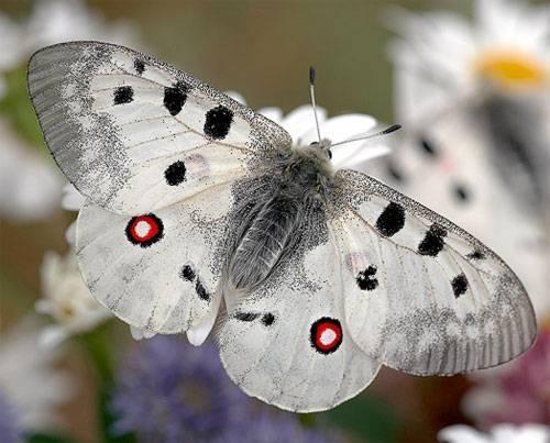 Бабочки ленинградской области