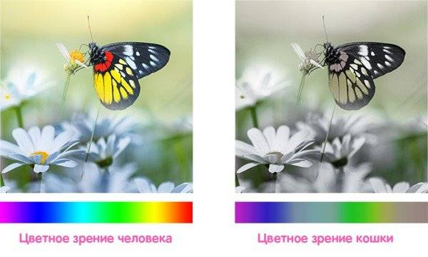 Сколько кадров в секунду видит муха и сколько у неё глаз. сколько глаз у обыкновенной мухи