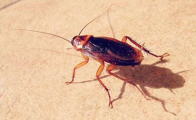 Ловушка для тараканов: обзор самых простых и эффективных методов ловли тараканов (125 фото)
