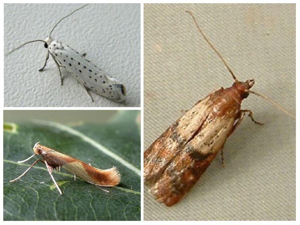 Моль в квартире – лучшие способы борьбы с насекомыми и методы выведения личинок