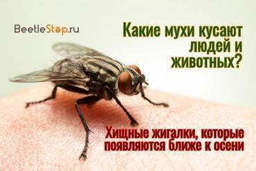 Почему мухи кусаются в конце лета. какие мухи кусаются осенью. что необходимо предпринять