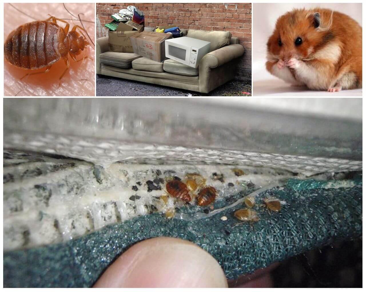 Советы, как защитить свою квартиру, если у соседей появились клопы
