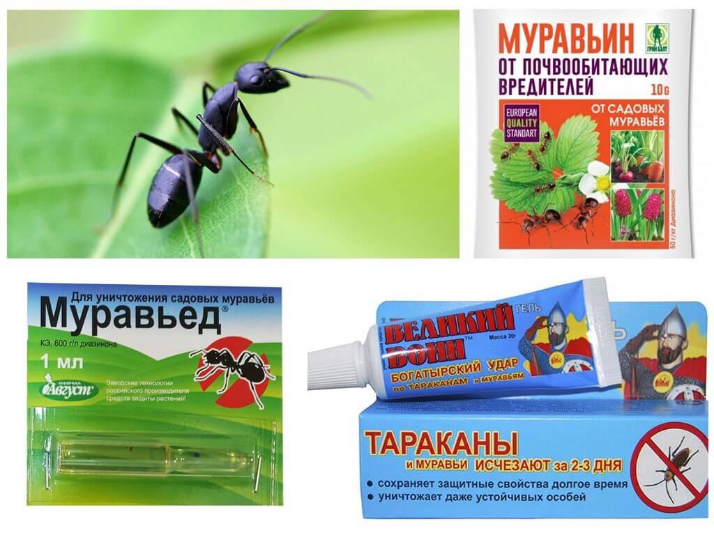 Народные средства от муравьев в огороде - самые эффективные рецепты для борьбы