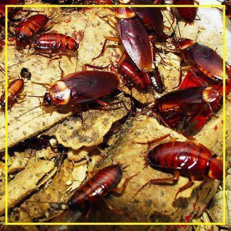 Народный способ избавится от тараканов без химии — простой и рабочий