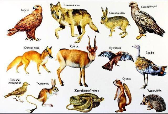 Дыбка степная: образ жизни и размножение хищного кузнечика. дыбка степная кузнечик