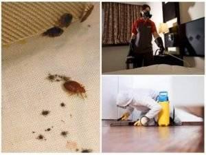 Чем самостоятельно травить клопов в квартире