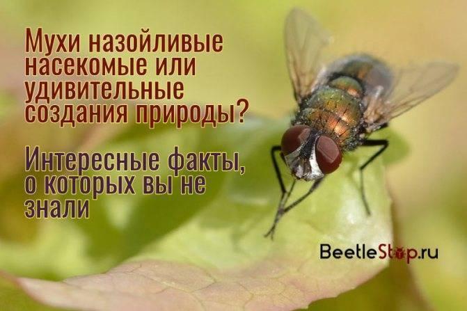 Польза пчел в жизни человека, особенности строения и интересные факты.