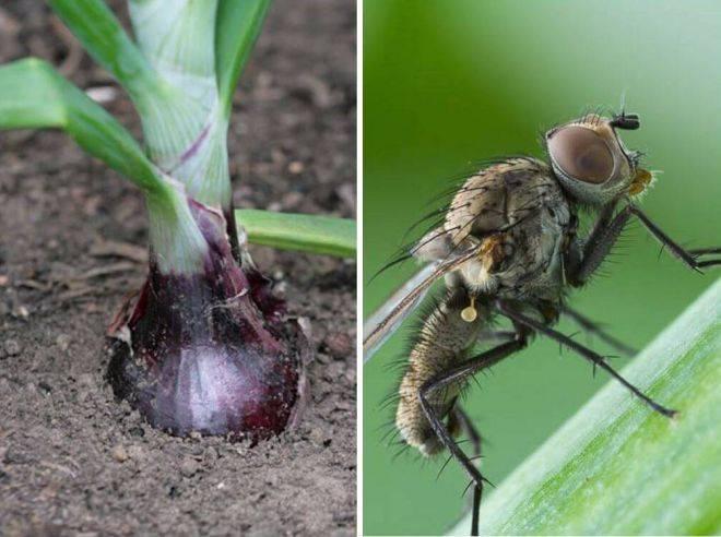 Применение березового дегтя в саду и огороде
