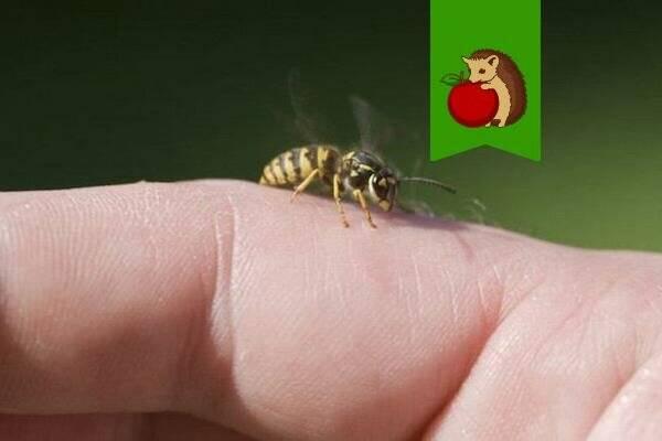 Как оказать первую помощь при укусе пчелы или осы