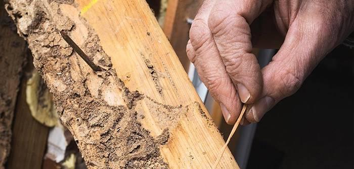 Основные пути решения проблемы для избавления от жука-короеда в доме