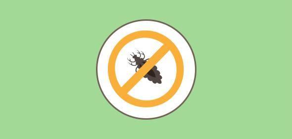 Как избавиться от педикулеза, чего бояться вши и гниды, какой запах им страшен? эффективные средства для борьбы
