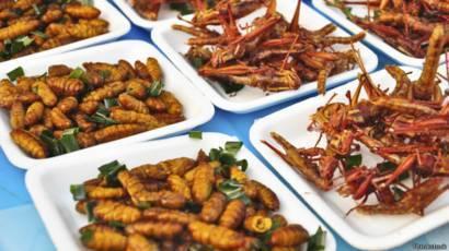 Готовим разных насекомых: рецепты