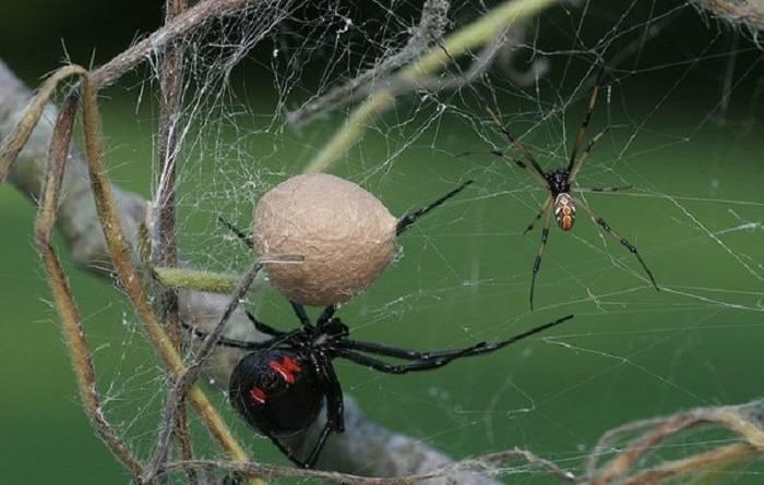 Если у вас паутина на яблонях — как бороться проверенными способами?