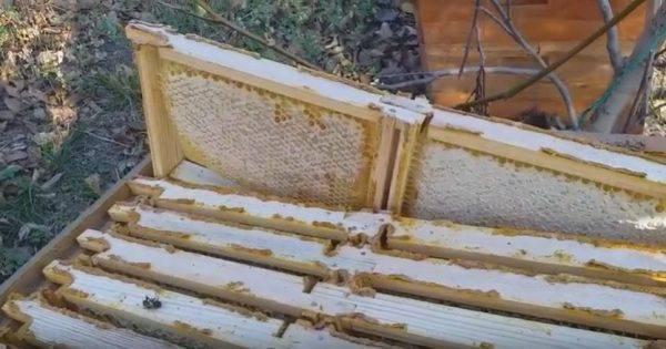 Пчелиный яд особенности воздействия на организм человека. свойства и применение