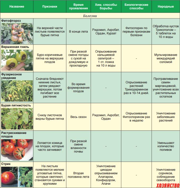 Вредители томатов — распространенные заболевания и способы по борьбы с вредителями. советы по посадке помидоров в открытый грунт и в теплицу (135 фото)
