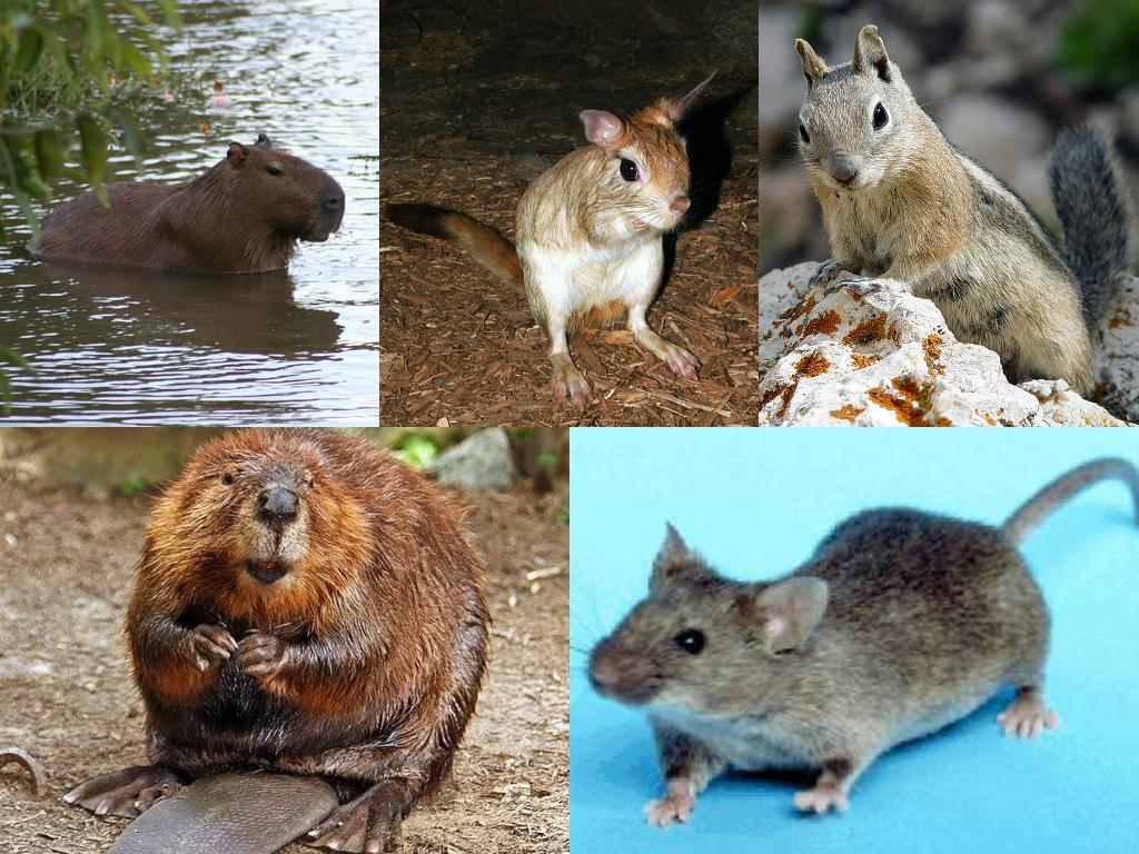 Разновидности грызунов вредителей и признаки их появления на дачном участке