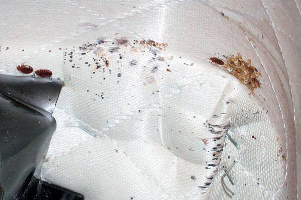 Как вывести клопов в диване – 3 лучших метода уничтожения